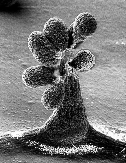 Proteobacteria